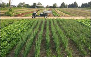 Кредит на развитие ЛПХ в Россельхозбанке в 2021 году: условия, ставка, как оформить?