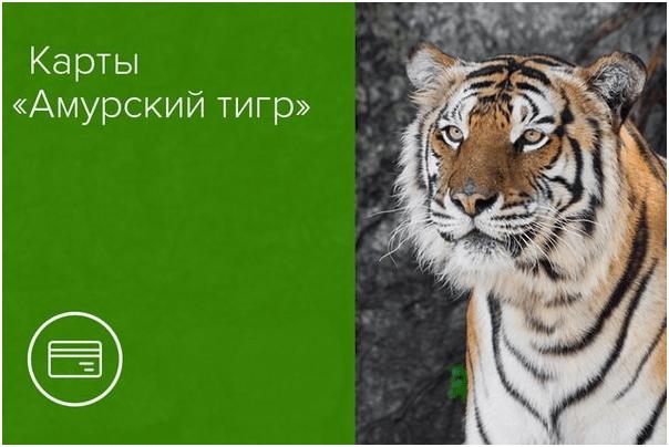 Амурский тигр – карта к вкладу от Россельхозбанка