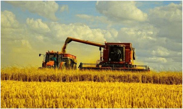 Кредит на развитие ЛПХ в Россельхозбанке: процентные ставки